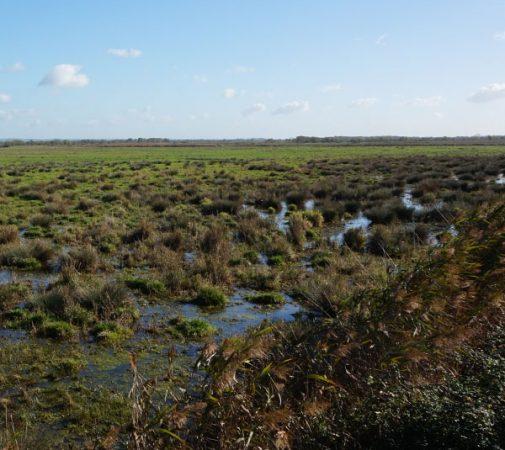 marais estuaire de la Loire