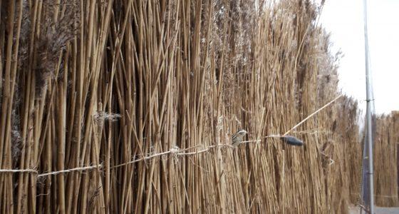 exposition oiseaux TERRE D'ESTUAIRE